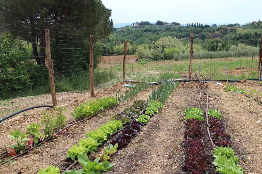 orto biologico con ortaggi bio siena toscana villa agostoli