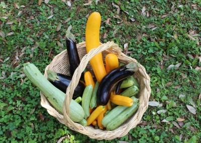 Organic Garden Products